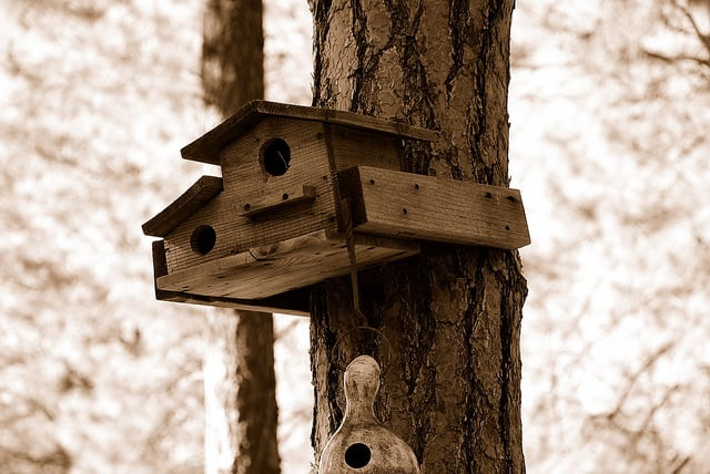 Squirrel's house