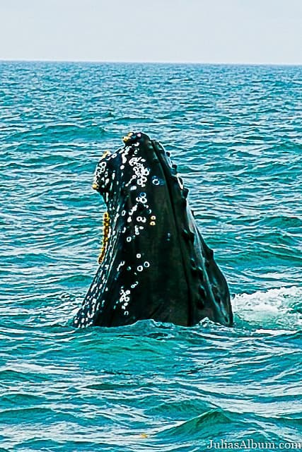 Whale Watching in Nova Scotia, things to do in the Summer in Canada