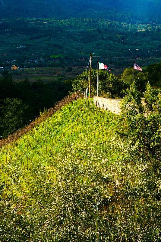 Sonoma Wine Tasting Tour, best California wine country tours, ultimate wine tours Sonoma