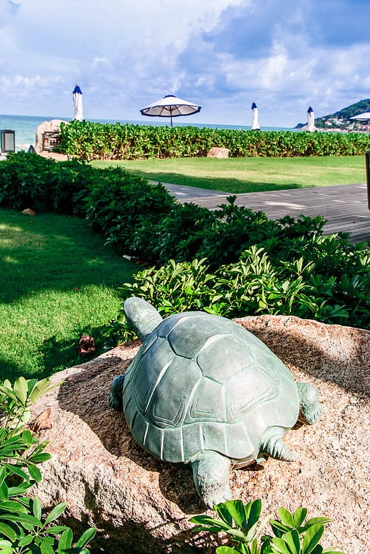 turtle at Panali restaurant, beachfront restaurant Koh Samui, dining on the beach in Thailand, best lunch spots Ko Samui, best lunch spots Thailand