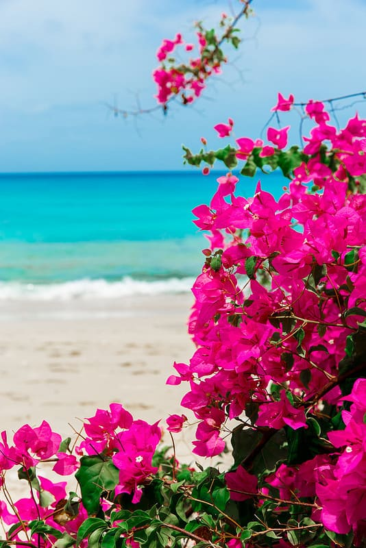 beautiful beach in Barbados, best beach in Barbados, turquoise water in Barbados, turquoise Caribbean water