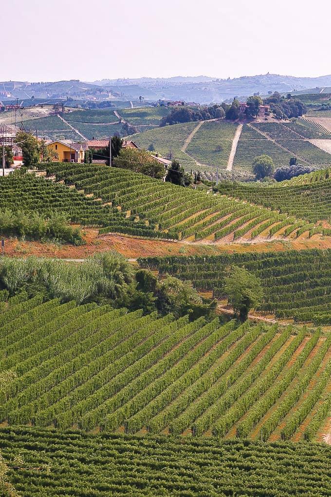 Barolo countryside, Piedmont
