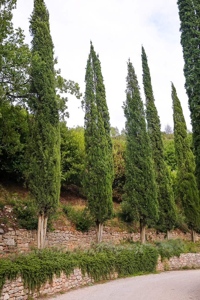 Cypress Trees at The Hotel Abbazia San Pietro in Valle, Italy