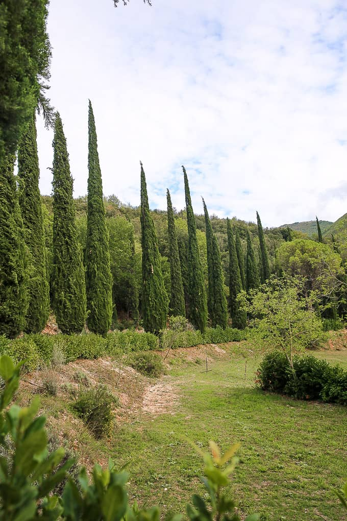 Cypress Trees at The Hotel Abbazia San Pietro in Valle