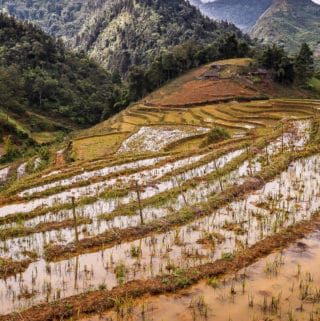 Rice Terraces flooded with rainwater in January, Sapa, Vietnam