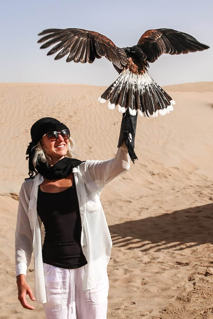 Flying a hawk in the Dubai Desert Conservation Reserve