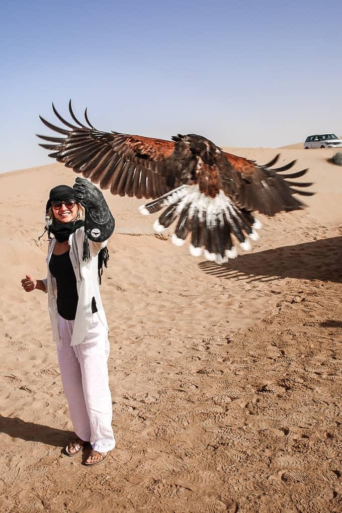 Flying hawks at the Dubai Desert Conservation Reserve