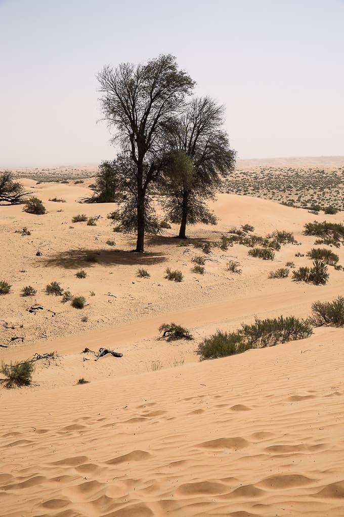 Wildlife drive through the Dubai Desert Conservation Reserve