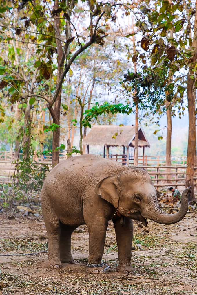 Elephant Village Sanctuary & Resort in Luang Prabang, Laos