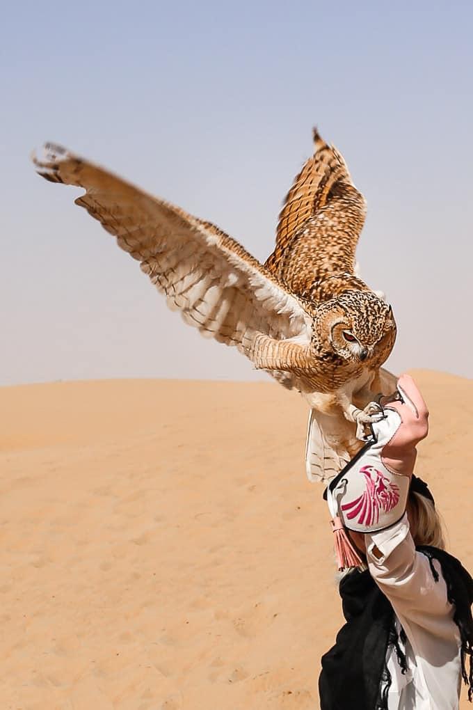 Owl in Dubai Desert