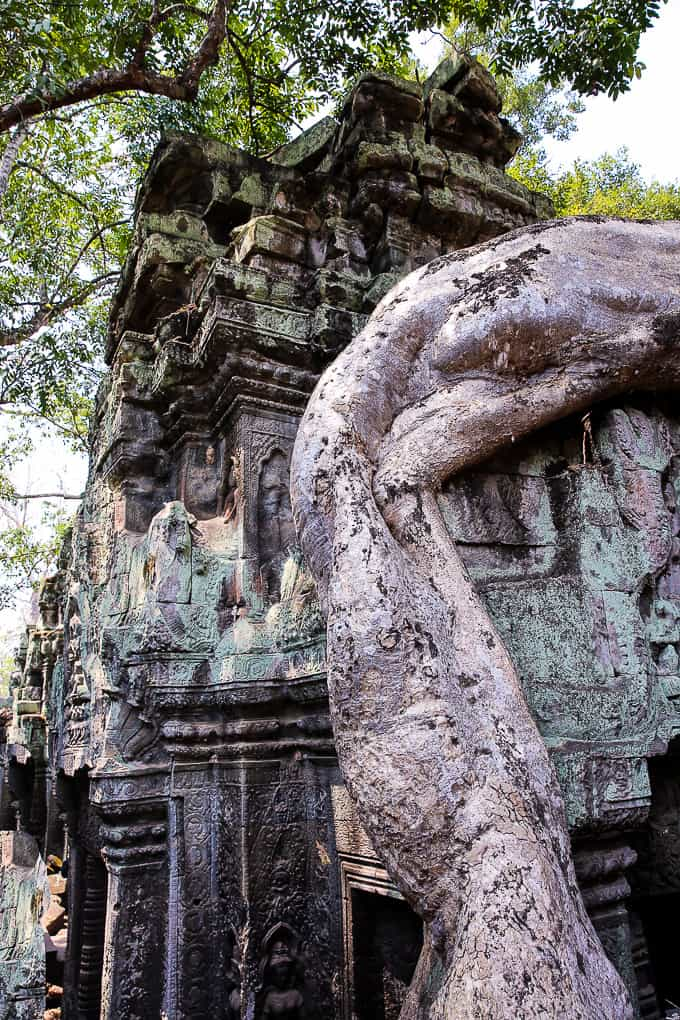 The tree growing over the temple structure at Ta Prohm, Cambodia
