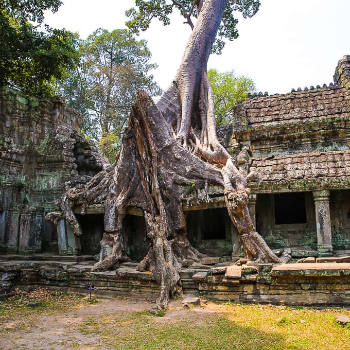The roots of a tree at the Preah Khan temple complex near Angkor Wat, Cambodia