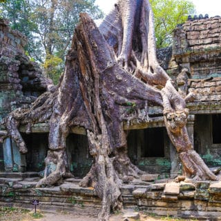 Tree roots at Preah Khan temple complex near Angkor Wat, Cambodia