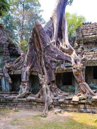 Tree roots at Preah Khan temple complex near Angkor Wat, Cambodia