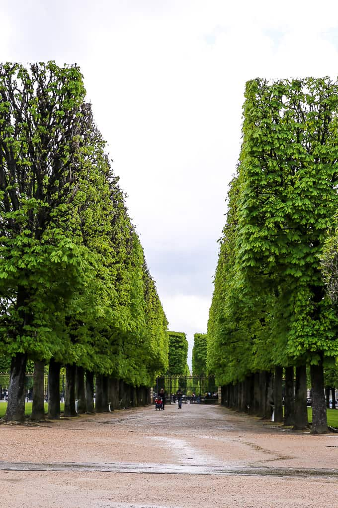 Tree-lined promenade, Jardin du Luxembourg, Paris
